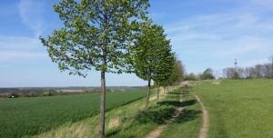 Petice za zachování stromořadí na Holém vrchu při cestě Roztoky - Únětice
