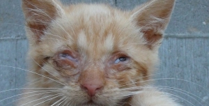 Nesouhlasíme se zákazem krmení zvířat!