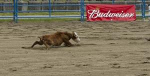 Petice za zrušení rodea vČesku
