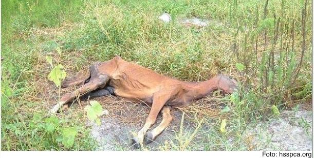 Zabraňme týrání zvířat!