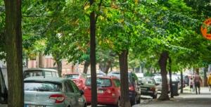 Petice za záchranu stromořadí v Belgické ulici