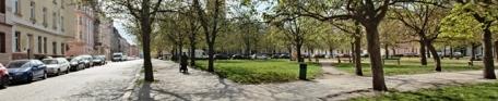 Počet stromů na Jiráskově náměstí vzroste ze 136 na 160