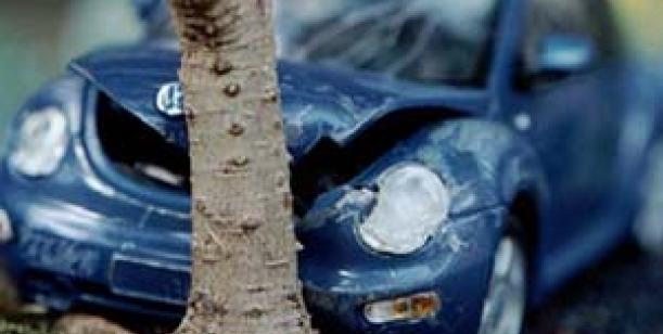 Petice proti sázení stromů podél komunikací