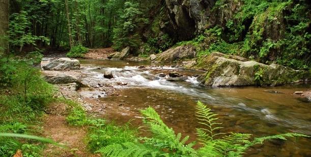Petice proti zničení údolí Zdobnice přehradou Pěčín