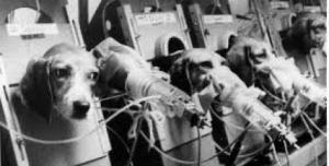 Petice : stop testování na zvířatech!