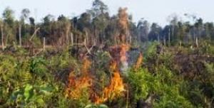 Za zrušení palmového oleje