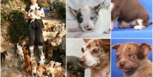 zákaz množení psů V ČR
