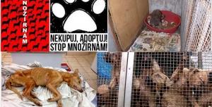 STOP množírnám a týrání zvířat