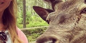 Nechte jelena z Kvildy žít !