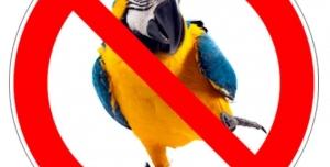 Stop prodeji papoušků v zoo obchodech