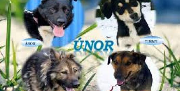 Petice za obnovení dobrovolnického venčení psů v útulku ve Valašském Meziříčí pro veřejnost.
