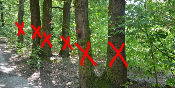 Petice Lesní divadlo