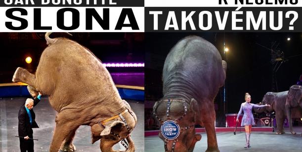 Roztoky - Cirkus bez zvířat!