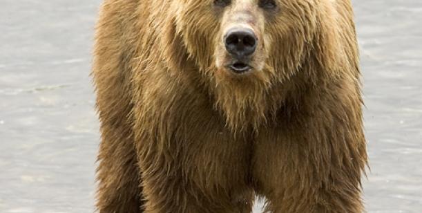 Petice pro udržení medvěda ze Vsetínska v jeho přirozeném prostředí, zvlášťě proti odsunu do ZOO.