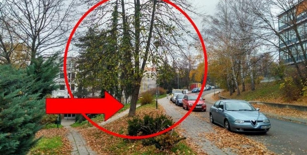 Zachování stromů v oblasti Družstevní ulice ve Zlíně II