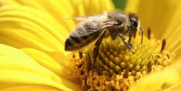 Stop pesticidům - zachraňte včely
