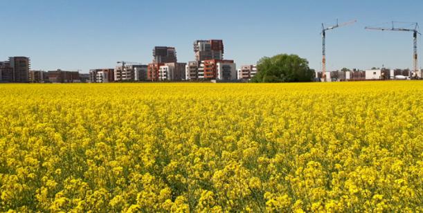 Omezení pěstování řepky olejné na území hlavního města Prahy