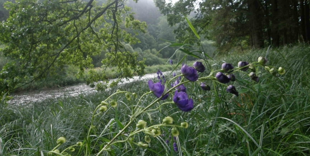 Chladivé proudy Vltavy – ne rozteklý asfalt cyklostezky