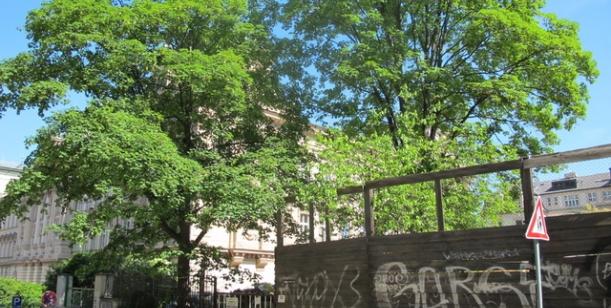 Petice za okamžité zastavení kácení zdravých vzrostlých stromů v centru Prahy