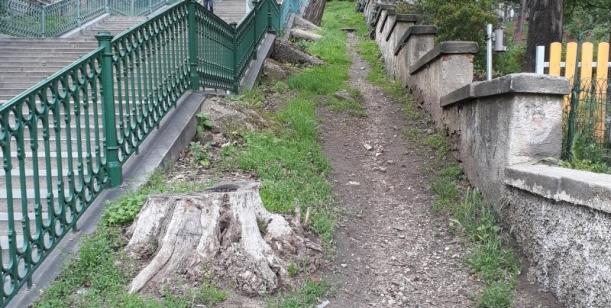 Petice za obnovu stromořadí u Nuselských schodů