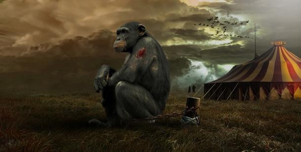 Zvířata nejsou klauni aneb Za Jaroměř bez smutných cirkusů