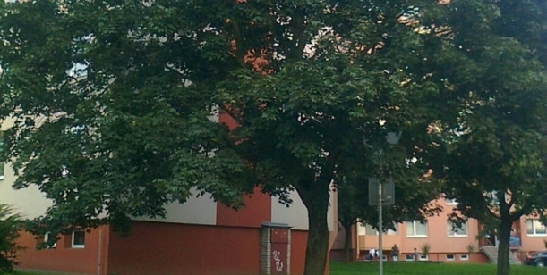 Zachování stromů na sídlišti Střed, Otrokovice