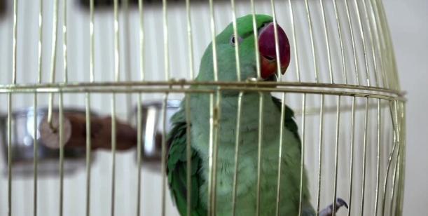 Petice za zrušení prodávání exotických zvířat v obchodech