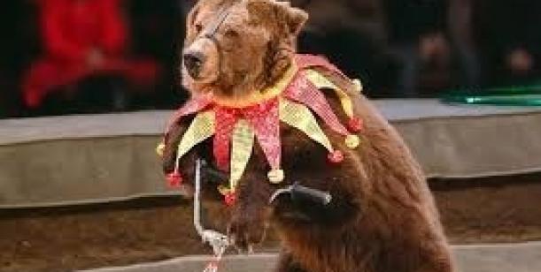Stop vystupování zvířat v cirkusech!