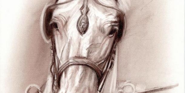 Petice za zachování pracovního, sportovního, rehabilitačního a rekreačního využití koní