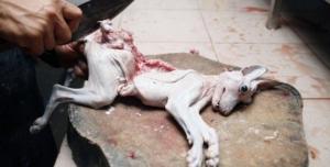 Zabíjení psů