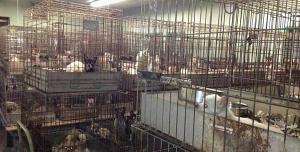 Petice proti množírnám psů