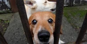 Petice za uzavření psího útulku v Dobranově (Česká Lípa) z důvodu špatných hygienických podmínek